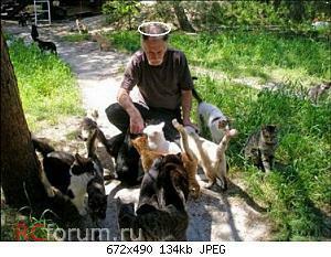 Нажмите на изображение для увеличения Название: homeless_cats_3 — копия.jpg Просмотров: 15 Размер:134.3 Кб ID:3867804